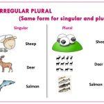 Học ngữ pháp cơ bản – Bài 1: Danh từ số ít và danh từ số nhiều